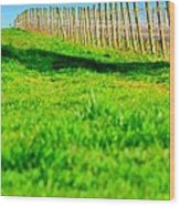 Vineyard Path 22628 Wood Print