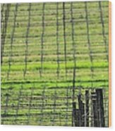 Vineyard Poles 23051 2 Wood Print