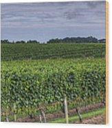 Vineyard Rows Wood Print