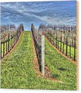 Vineyard Bodega Bay Wood Print
