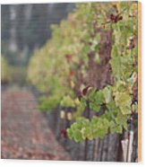 Vineyard View Wood Print