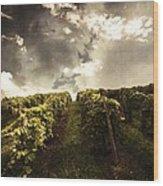Vineyard Wanderlust Wood Print