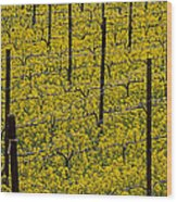 Vineyards Full Of Mustard Grass Wood Print