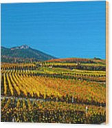 Vineyards In Autumn, Valais Canton Wood Print