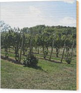 Vineyards In Va - 121251 Wood Print by DC Photographer