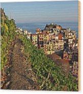 Vineyards Of Manarola Wood Print