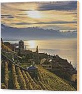 Vineyards Saint-saphorin, Lavaux Wood Print
