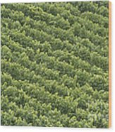 Vinschgau Vineyard Wood Print