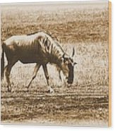 Vintage African Safari Wildbeest Wood Print
