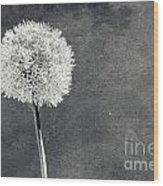 Vintage Allium Flower Wood Print