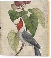 Vintage Bird Study-d Wood Print