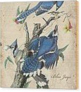 Vintage Bird Study-f Wood Print