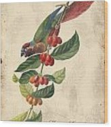 Vintage Bird Study-h Wood Print