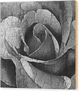 Vintage Cracked Rose Wood Print