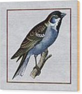 Vintage English Sparrow Square Wood Print