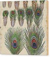 Vintage Feather Study-jp2084 Wood Print