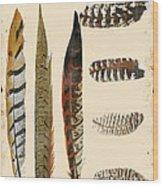 Vintage Feather Study-jp2085 Wood Print