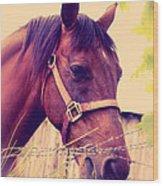 Vintage Horse Wood Print