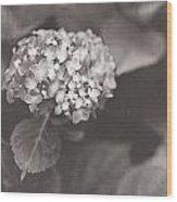 Vintage Hydrangea Wood Print
