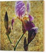 Vintage Iris Wood Print