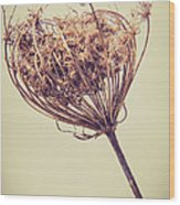 Vintage Lace Wood Print