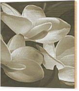 Vintage Plumeria Trio Wood Print
