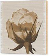 Vintage Rose 2013 Wood Print
