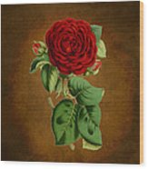 Vintage Rose Reflections Wood Print