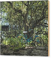 Vintage Schwinn And Ancient Live Oak Wood Print