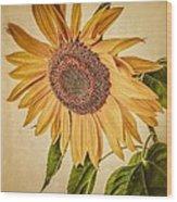 Vintage Sunflower Wood Print