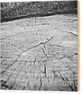 Vintage Tree Stump Wood Print