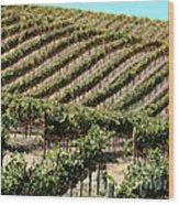 Vinyards In Napa Valley Wood Print