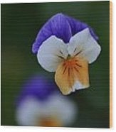 Viola Reflection Wood Print