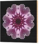 Violet And White Dahlia I Flower Mandala Wood Print