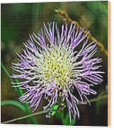 Violet And Yellow Flower Wood Print