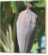 Violet Banana Blossom Wood Print