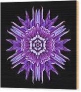 Violet Chrysanthemum Iv Flower Mandala Wood Print