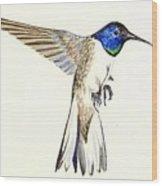 Violet Crowned Hummingbird Wood Print