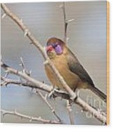 Violet Eared Waxbill Female Wood Print
