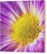 Violet Flower Macro Wood Print