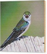 Violet Green Swallow Wood Print