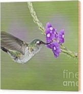 Violet-headed Hummingbird Wood Print
