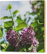 Violet Lilacs And A Bee Wood Print