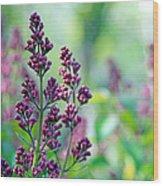 Violet Lilacs Budding Wood Print