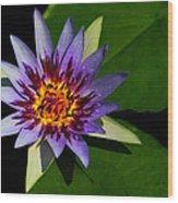 Violet Lily Wood Print