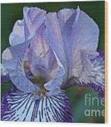 Violet Lines Wood Print
