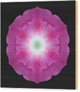 Violet Morning Glory Flower Mandala Wood Print