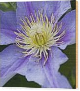 Violet Morning Wood Print