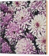 Violet Mums Wood Print