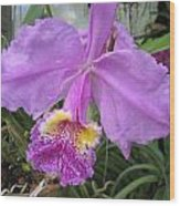 Violet Orchid Wood Print